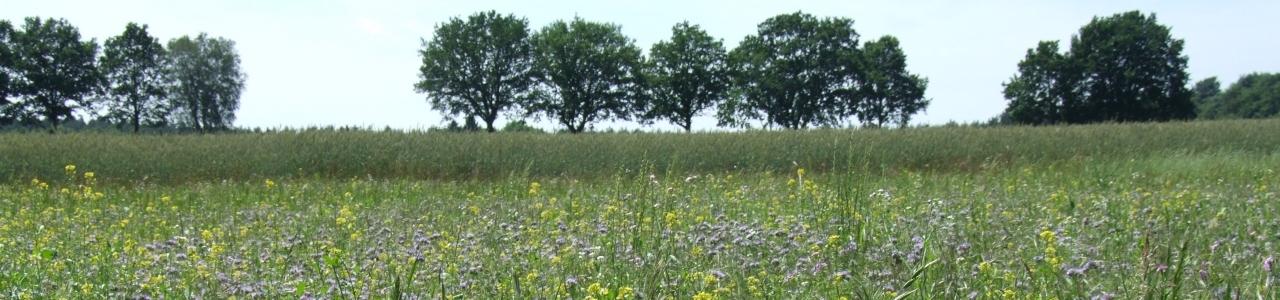 Feld mit Blumen für die Bodenverbesserung bei Boltersen