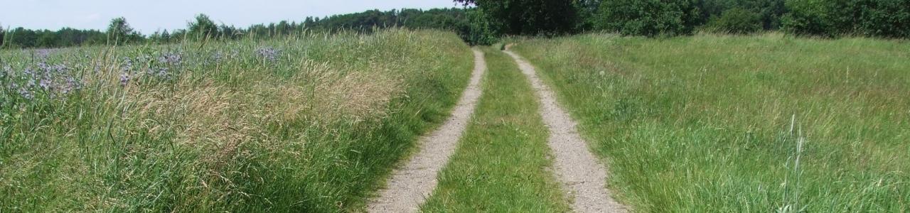 Befahrbarer Feldweg bei Boltersen