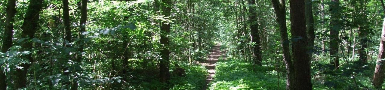 Sonnendurchfluteter Wald bei Rullstorf